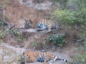 Bandhavgarh National Park Holiday Package Photos