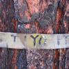 Tiyo Point Trail - Grand Canyon - Arizona - USA