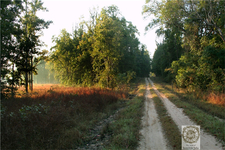 Trail In Kanha National Park