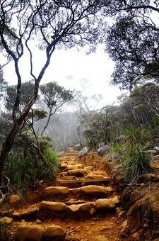 Trail Up Kinabalu
