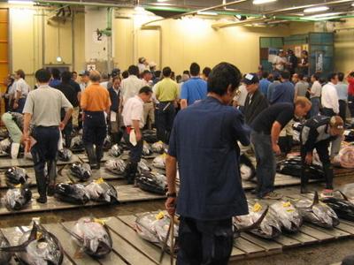 Tsukiji Fresh Tuna Auction