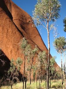 Uluru Base Trees