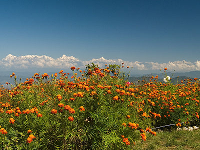 View Of Himalayas From The Top Of Mukteshwar