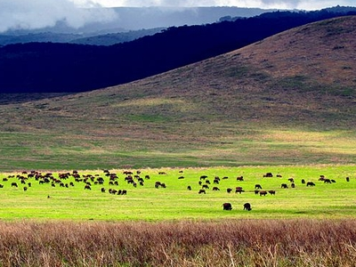 View Of Ngorongoro From Inside The Crater