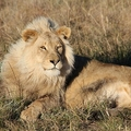 South Africa Tourist Attractions - Tourism in South Africa