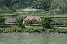 Vineyards Danube Wachau