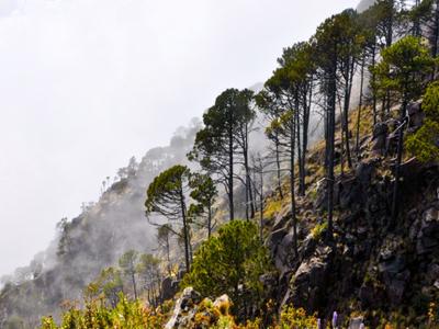 On The Slopes O Tacana Volcano