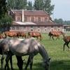 Walewice - Palace and Horse Stud Farm