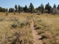 Wildcat Trailhead Open Expanse