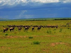 Exotic Kenya Safari Photos