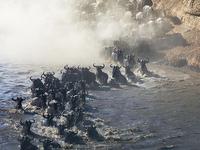 5 Days Wildebeest Migration Tour Serengeti
