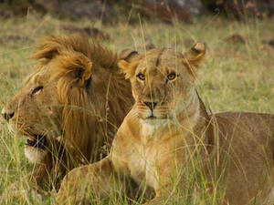 Go Places Maasai Mara Experience Photos