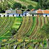 Wine Culture In Lower Austria