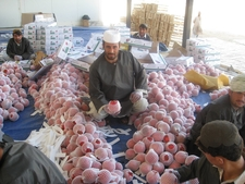 Workers Processing Pomegranates