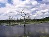 Yala National Park View