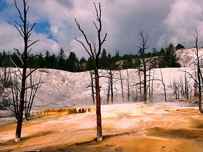 Yellowstone NP View WY