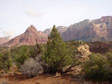 Yucca Camp - Zion - Utah - USA