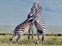 2 Days Camping Safari Manyara Or Tarangire, Ngorongoro
