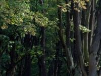 Zwierzyniecki Woods