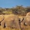 4 Days Amboseli Tsavo camping Safari