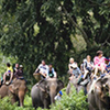 Full Day Rafting 5km And Elephant