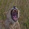 Lake Manyara, Serengeti and Ngorongoro Camping safari