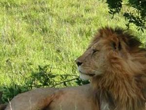 Maasaimara, lake Nakuru, Lodge,safari Photos