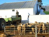 Experience Life on a Beautiful Farm