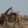 Loitokitok-Amboseli