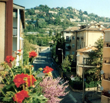 Bergamore