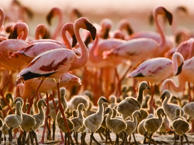 Safari Tarangire and Lake Manyara Photos