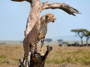 Big Cats Trip in Northern Tanzania