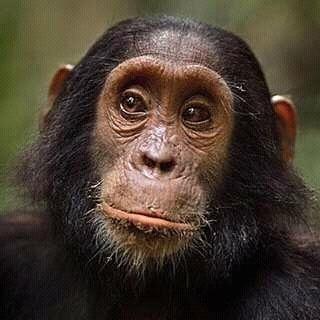 Uganga Safaris Photos