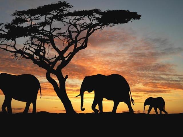 Sanbona Safari and Cape Town Photos