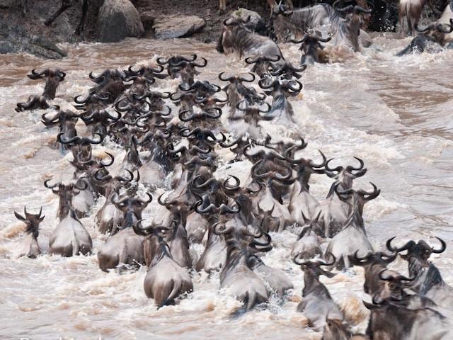 Great Migration Safari - Kenya July - Oct Photos