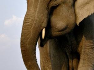 North East India Wildlife Photos