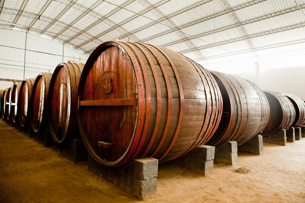 Tour Tasting Wine and Pisco in Ica Photos