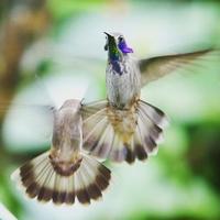 Nestbirdingtours