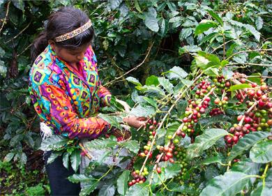 Esteli City & Coffee Tour From Managua Photos