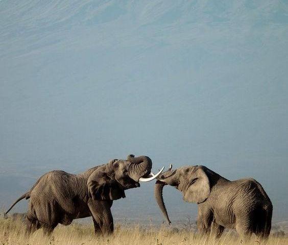 Amboseli, Masai Mara and Nakuru Safari Adventure Photos