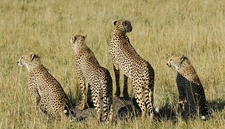 3 Days Kenya Masai Mara Camping Safari