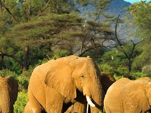 Kenya Wildlife Trip Masai Mara, Lake Nakuru, Samburu Fotos