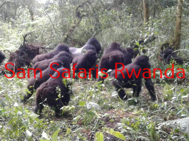The Gorillas Valentine Escapade Photos