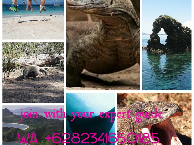 Fullday Komodo Trip Photos