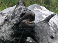 Kaziranga Wildlife Tour Package