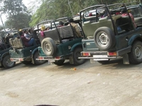 Jeep Safari At Kaziranga