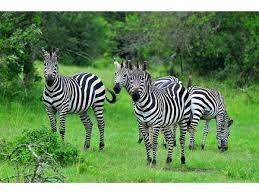 A 9 Days Wildlife Holiday in Uganda Photos