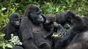 Express Gorilla Tracking Plus Lake Bunyonyi Experience Fotos