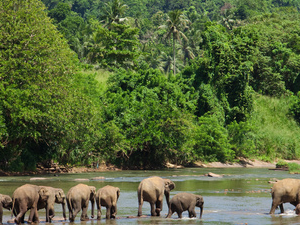 Sri Lanka Rundreise Fotos