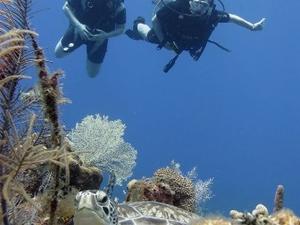 Roatan Dive Package Photos